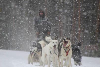 Dog Sledding in Vail / Beaver Creek